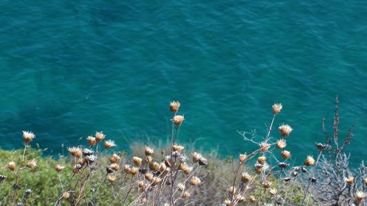 Plant and the Sea
