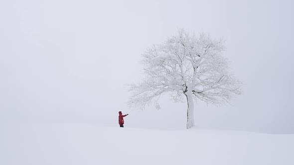 Thumbnail for Fantastic Landscape with Snowy Tree