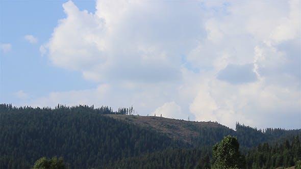 Thumbnail for Pine Deforestation Timelapse