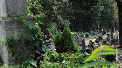 Graves in Cemetery View