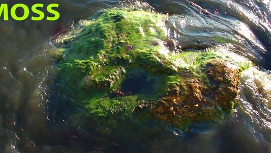 Thumbnail for Seaweed
