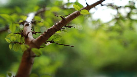 Thumbnail for Rain On Leaves 2