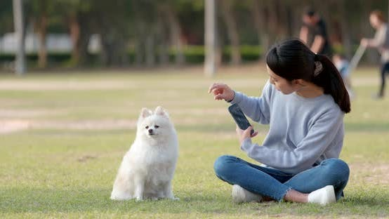 Thumbnail for Woman play with her dog at outdoor park