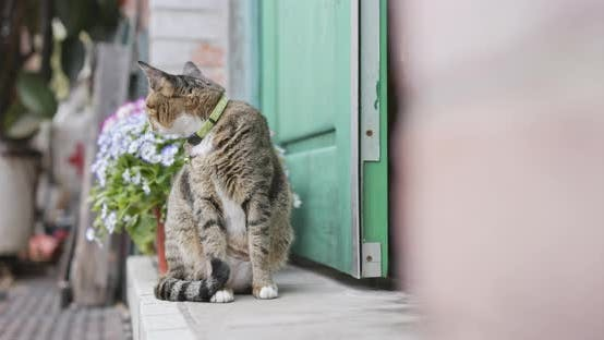 Street cat sitting at the house door