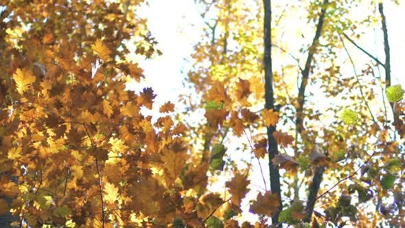 Thumbnail for Autumn Brown Leaves
