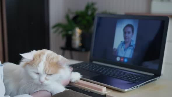 Hilfe des Tierarztes Online, Liebevolle Fürsorge Frau mit Ihrer geliebten Katze Kommuniziert mit