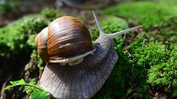 Thumbnail for Snail in the Wood