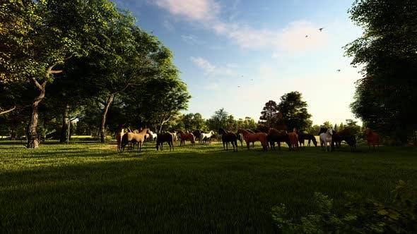 Thumbnail for Grazing Wild Horses