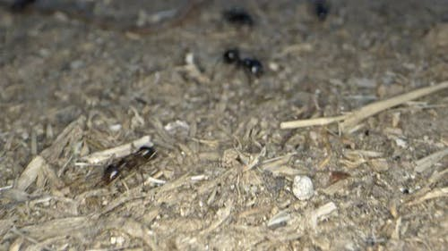 Animal Insects Ants On Soil 15