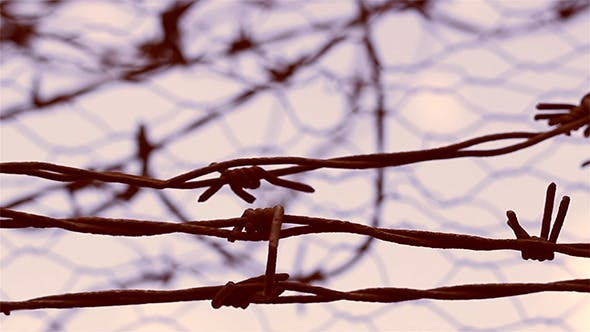 Thumbnail for No Escape Barbed Wire