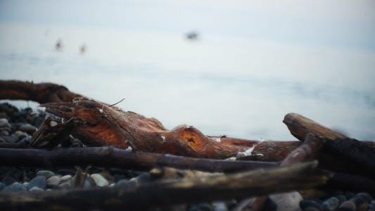 Thumbnail for Seashore 1