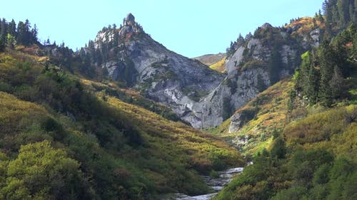 Colorful Mix Plants in Mountain at Approaching Autumn Season Colors