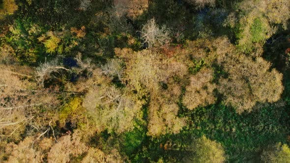 Forest seen from above. Beautiful, colorful woods in autumn.