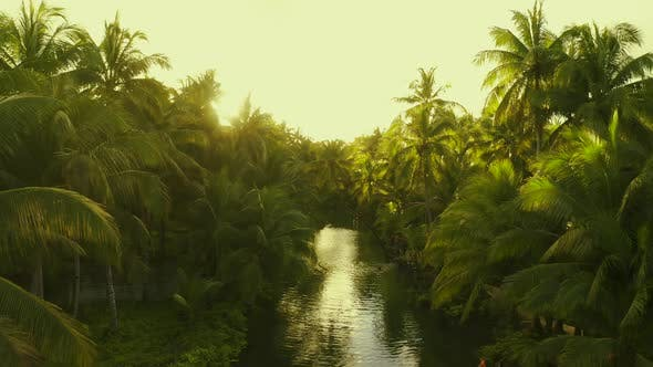 Cover Image for Sunset Nature River Landscape and Palm Trees Aerial View. People Having Active Fun in River
