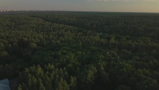 Thumbnail for Drone Flight Over Pine Forest During Sunset, Clear Blue Sky