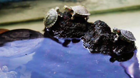 Cover Image for Turtles On The Rocks