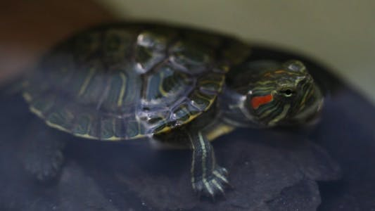 Thumbnail for The Turtle 2