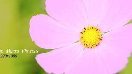 The Macro Flower