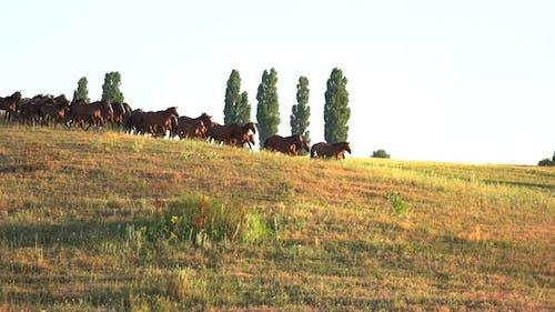 Horses Run on Grassy Meadow