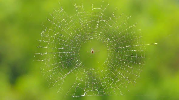 Thumbnail for The Spider Sits in the Center of the Web