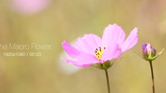 Cover Image for The Macro Flower 2