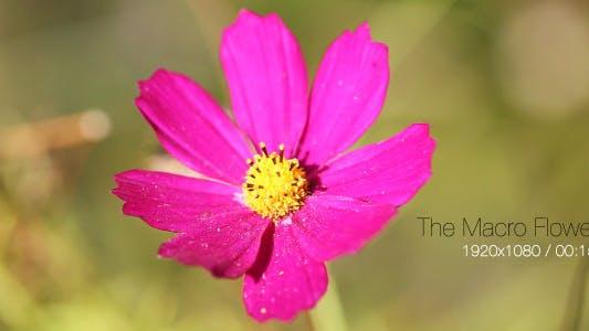 Thumbnail for The Macro Flower 3