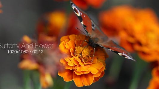 Thumbnail for Butterfly And Flower