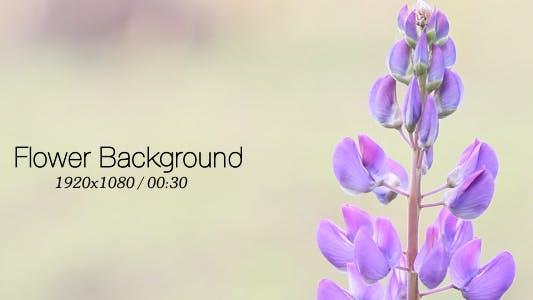 Thumbnail for Flower Background