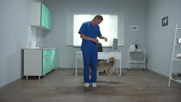 Vet in Uniform Trains a Husky in Cabinet