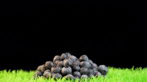 Thumbnail for Fresh organic blueberries on green vibrant grass surface