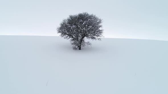 Thumbnail for Winter Landscape With Lonely Tree