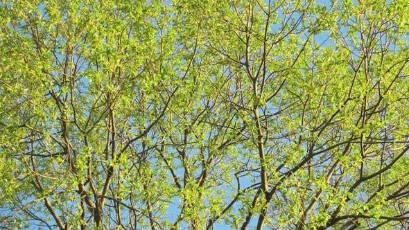 Schöner grüner Baum und blauer Himmel