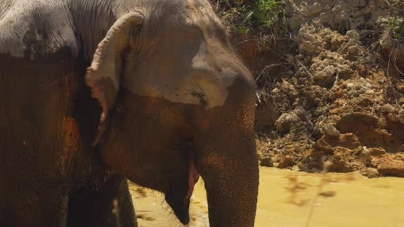 Thumbnail for Elephant Getting Wet In A River In The Savanna