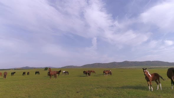 Horses in Steppe