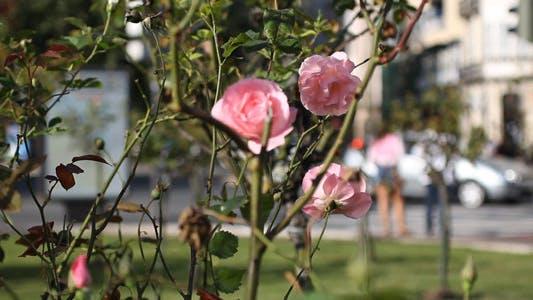 Thumbnail for Street Flowers 03