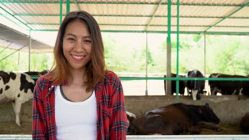 Asian woman or farmer with and cows in cowshed on dairy farm-Farming, and animal husbandry.