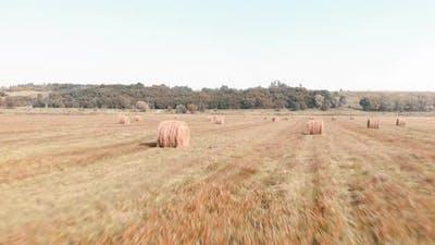 Haystacks in field. Ricks on wheat field. Summer field with round hay bales.