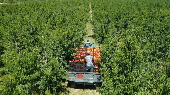 Thumbnail for Aerial view of a tractor carrying peach