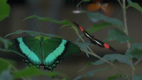 A flutter of butterflies