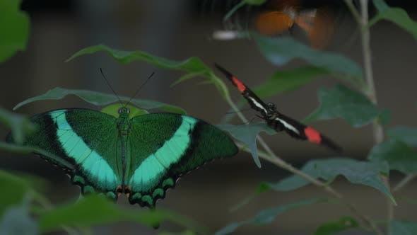 Thumbnail for A flutter of butterflies