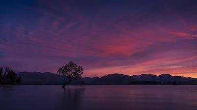 Wanaka Tree daybreak timelapse
