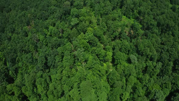 Thumbnail for Aerial View Tree Tops Forests