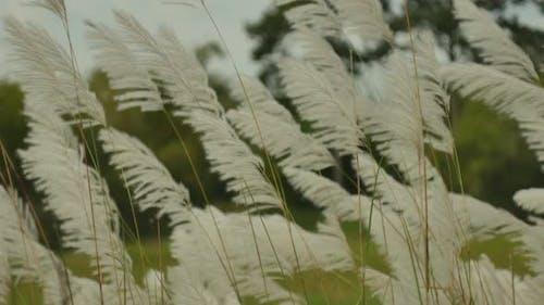 Grass On Wind