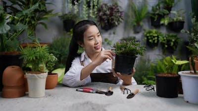 woman looking a plant after pruning the plant