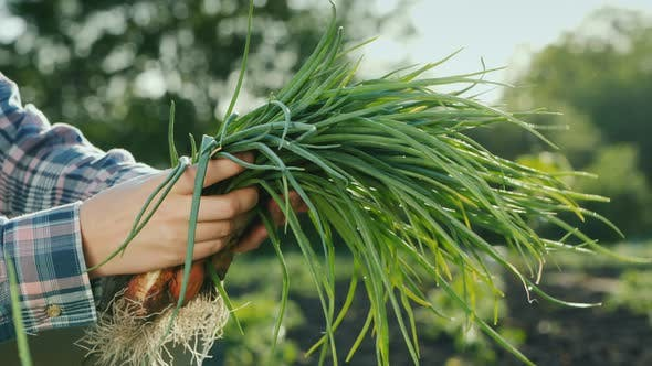Thumbnail for Side View of A Farmer Holds a Fistful of Green Onions