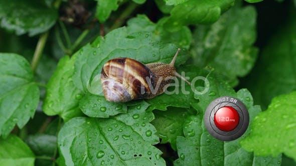 А Snail