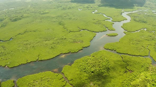 Thumbnail for Aerial View of Mangrove Forest and River