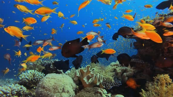 Cover Image for Underwater Fish on Vibrant Coral Garden