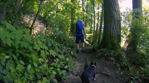 Cover Image for Family Forest Hike With Pet Boston Terrier Dog