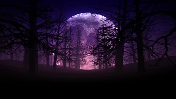 Thumbnail for Full Moon Night In Forest Halloween Background 01 HD